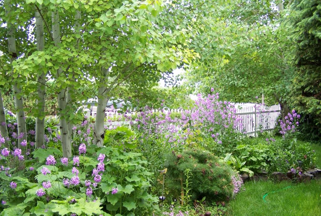 My Secret Garden: My Secret Garden CottageLodge